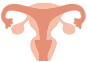 子宮と卵巣のイラスト