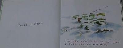 雪の中のいちご